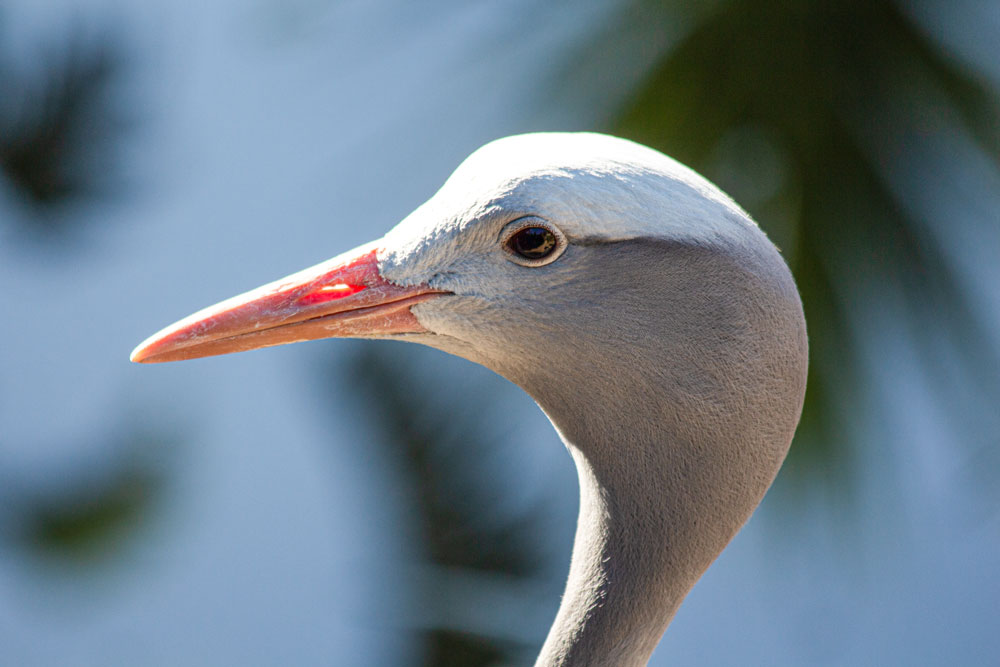 World Of Birds Largest Bird Park In Africa